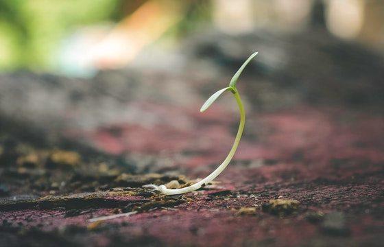 pertumbuhan primer dan sekunder pada tanaman