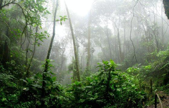 negara dengan hutan hujan tropis terbesar di dunia
