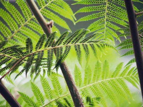 Siklus Hidup Tumbuhan Paku