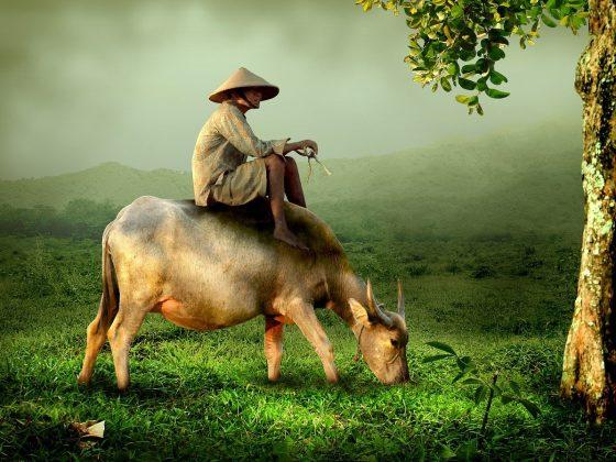 manfaat hewan bagi kehidupan manusia