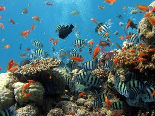 organ gerak ikan dan fungsinya