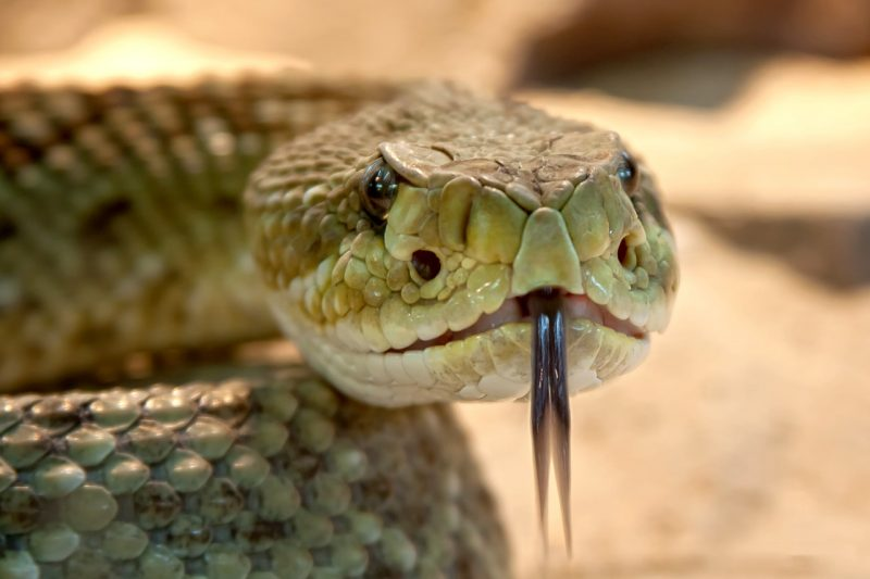 organ gerak ular